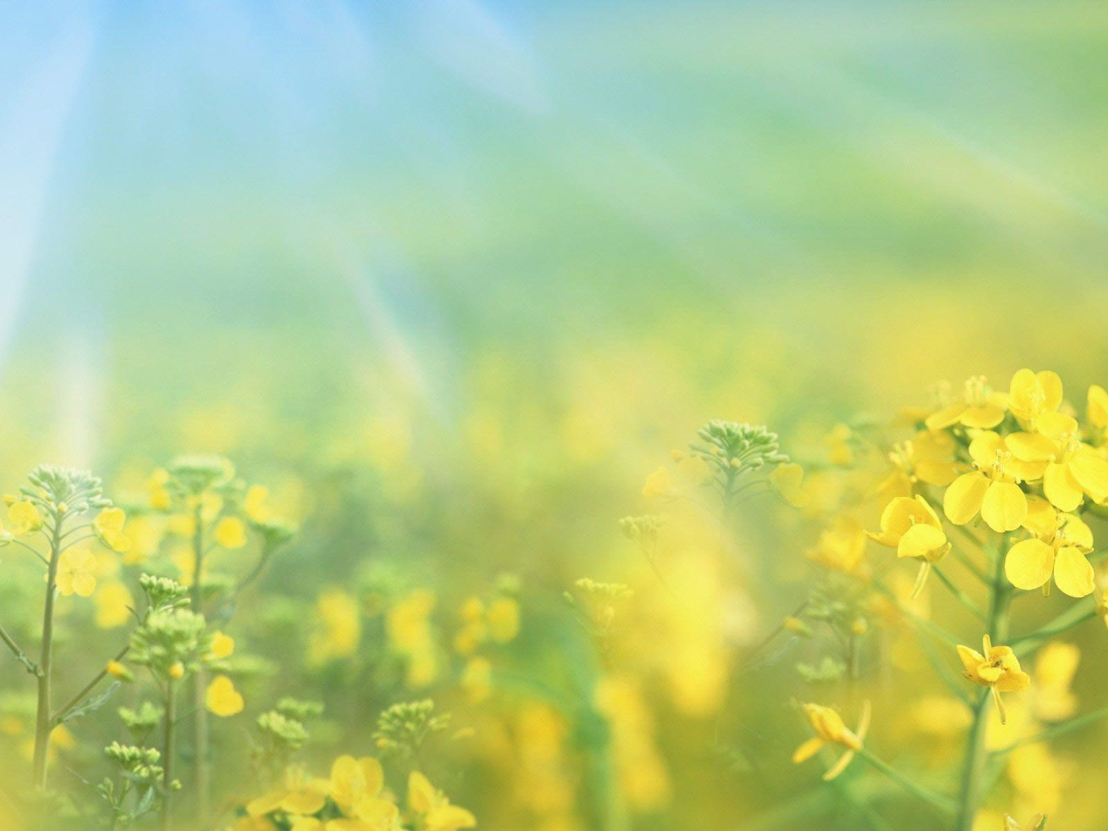 spring backgrounds pictures free wallpaper cave