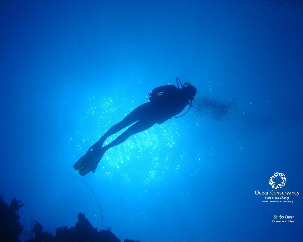 scuba diving wallpaper wallpapers - photo #14