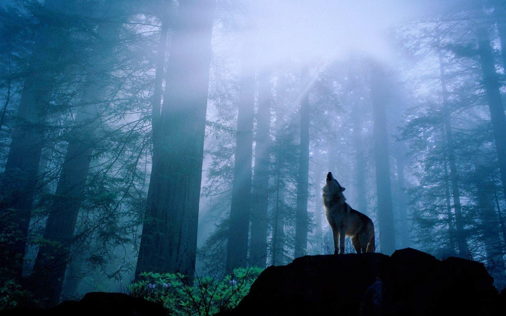 black wolf howling wallpaper - photo #10