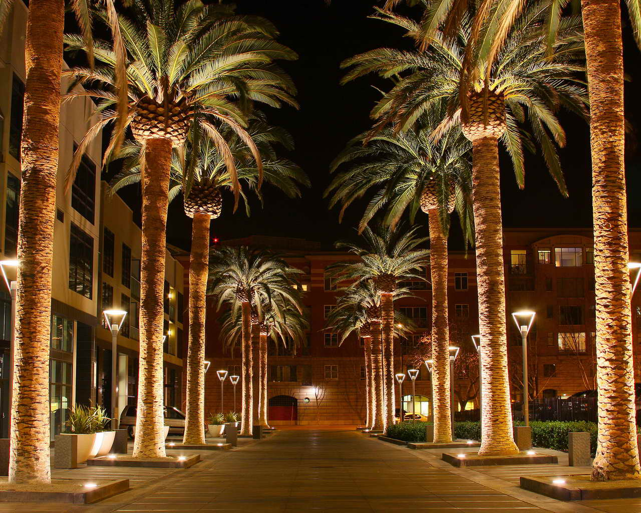 Christmas Trees In Miami