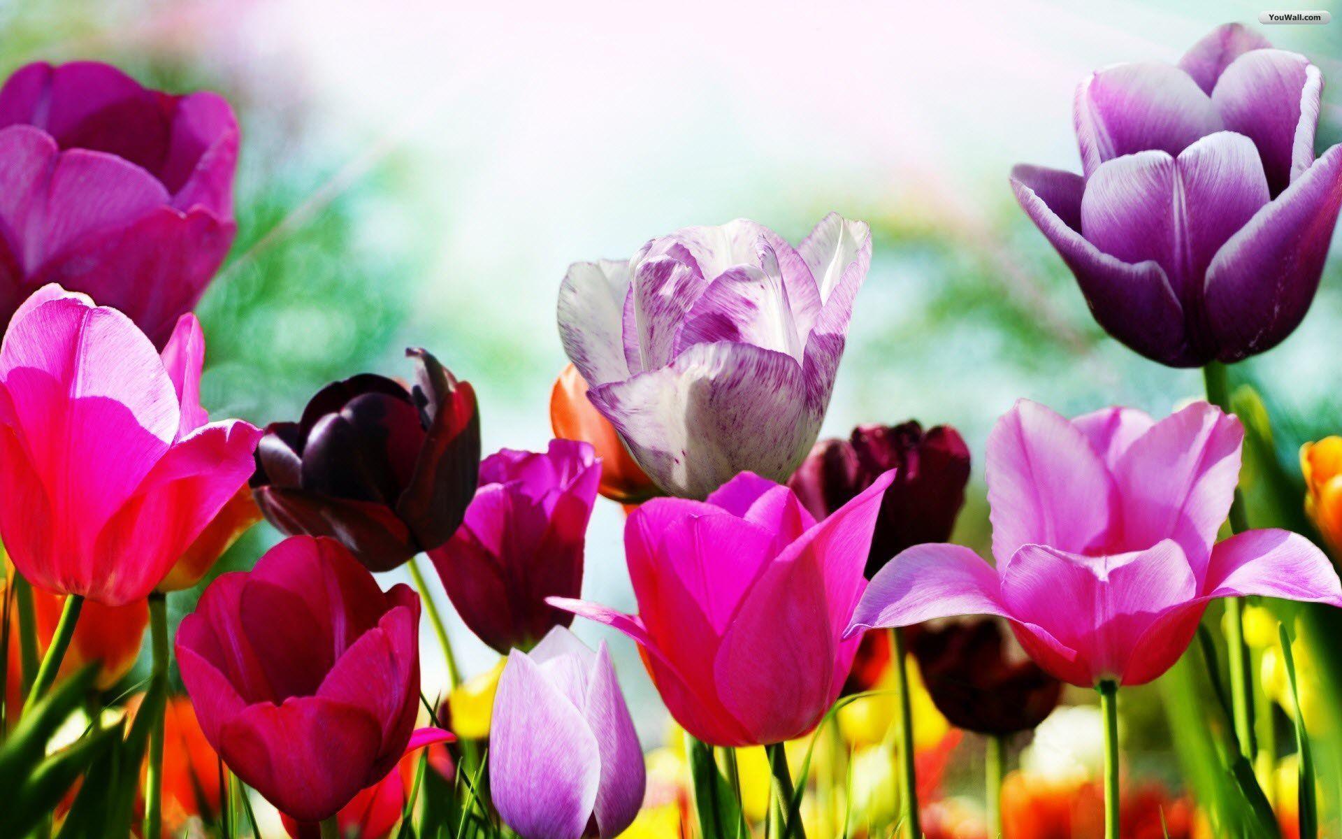 free spring wallpaper desktop wallpaper free spring wallpaper