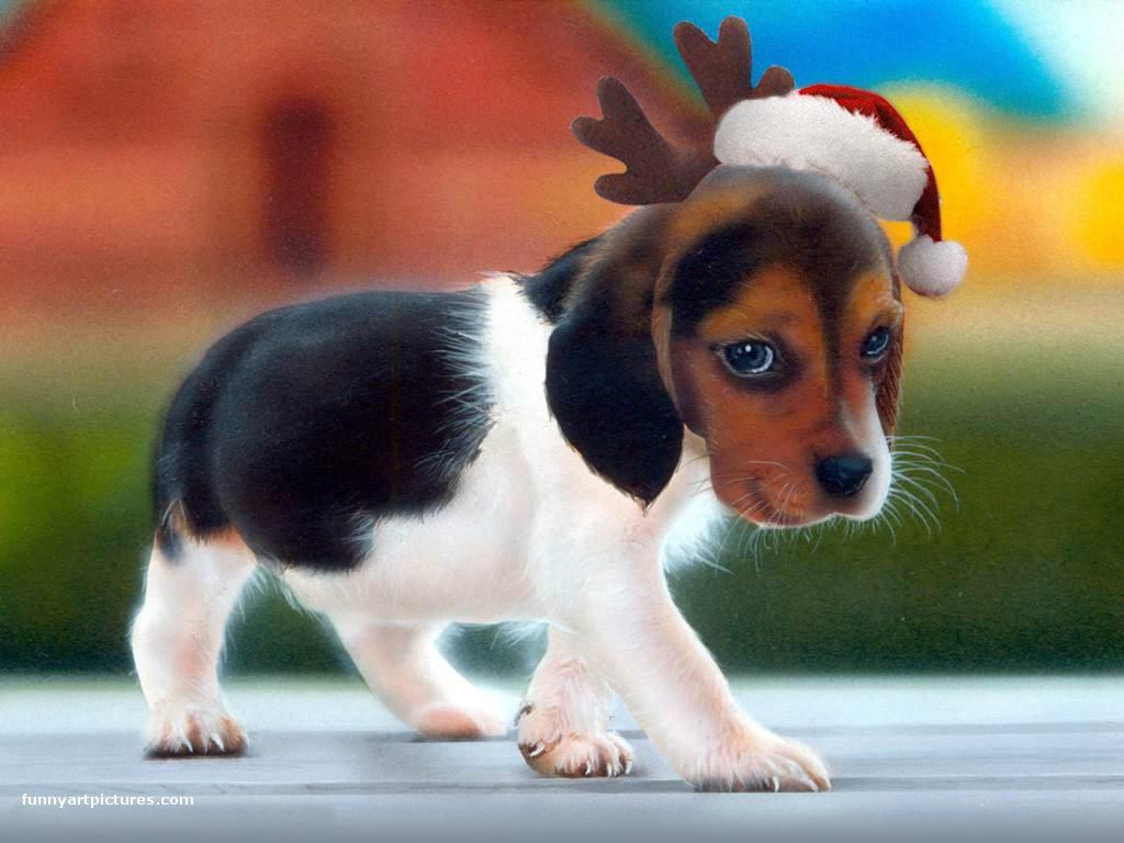 Cute Christmas Puppies.20 Christmas Puppies To Fill Your Holiday With Cheer