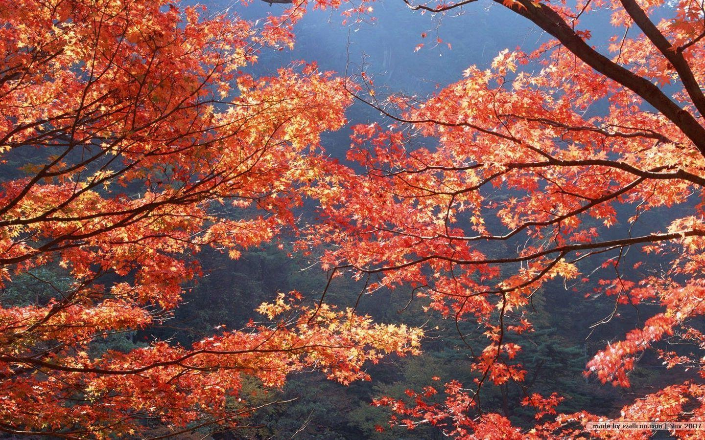 Fall Foliage Wallpapers - Wallpaper Cave