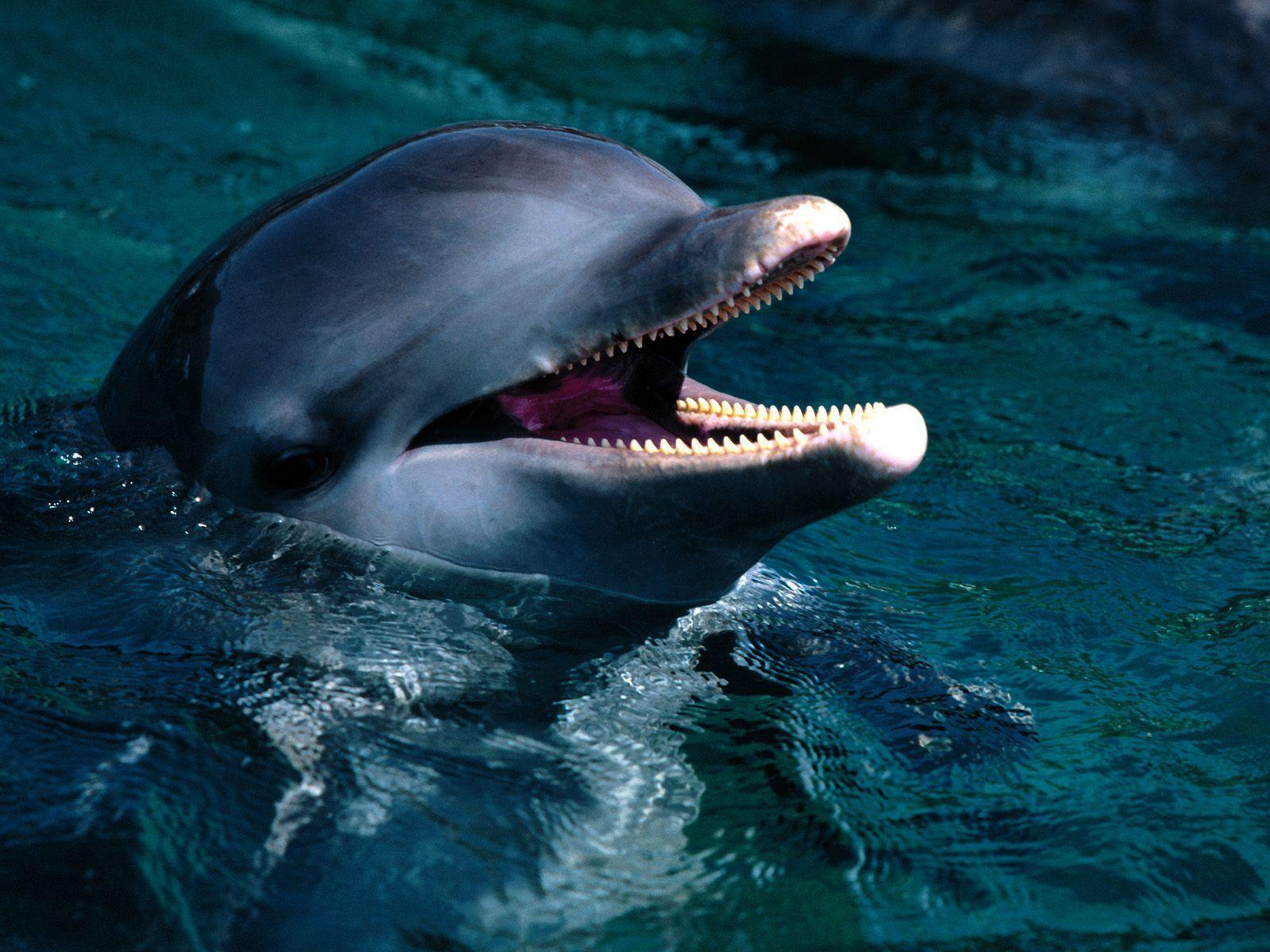 Free Dolphin Wallpaper, Screensavers, Pictures, Videos and Site ...