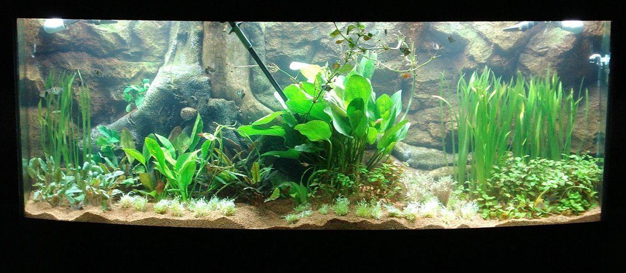Fresh Batch of Completed Tanks | Designs By Nature - 3D Aquarium ...