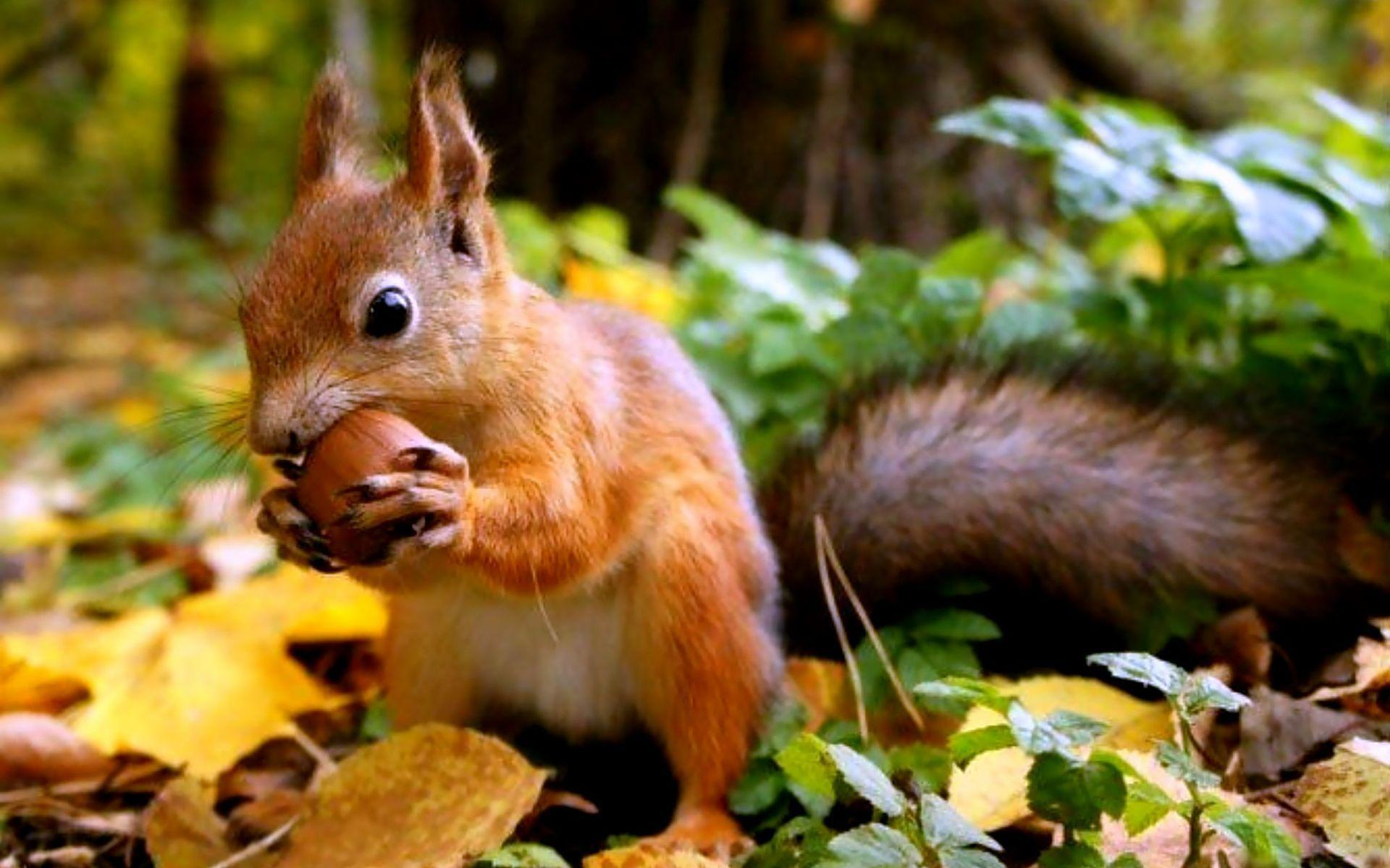 squirrel wallpapers wallpaper cave