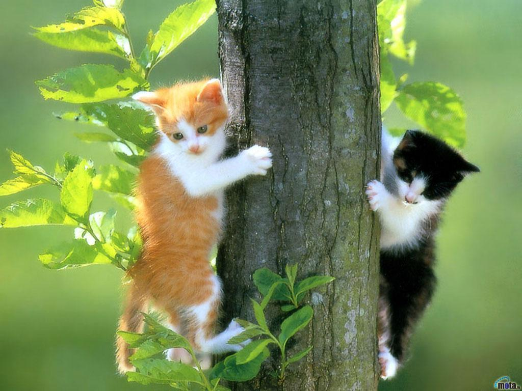 cats-wallpapers-4 - High Definition Wallpaper Collection | High ...