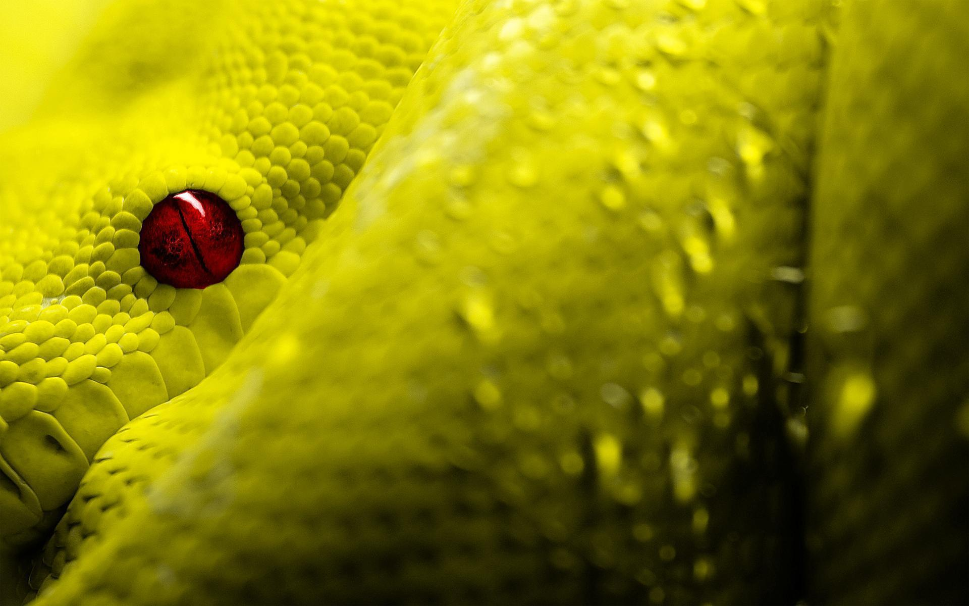 22 reptile hd wallpapers - photo #29