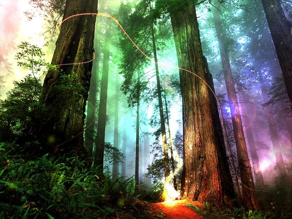 Most Inspiring Wallpaper High Quality Forest - JY5oipp  Collection_525963.jpg