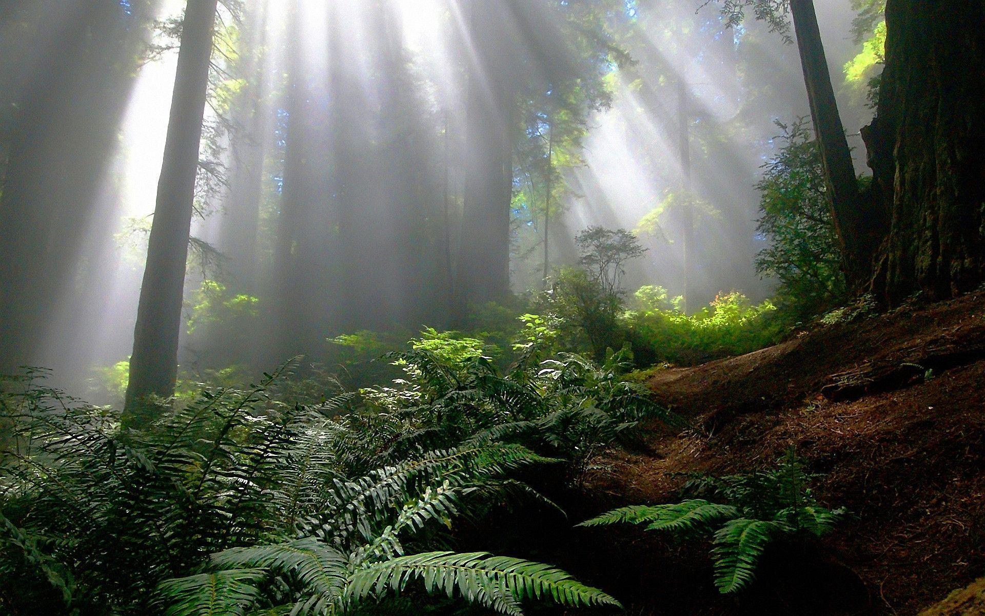enchanted forest background - photo #4