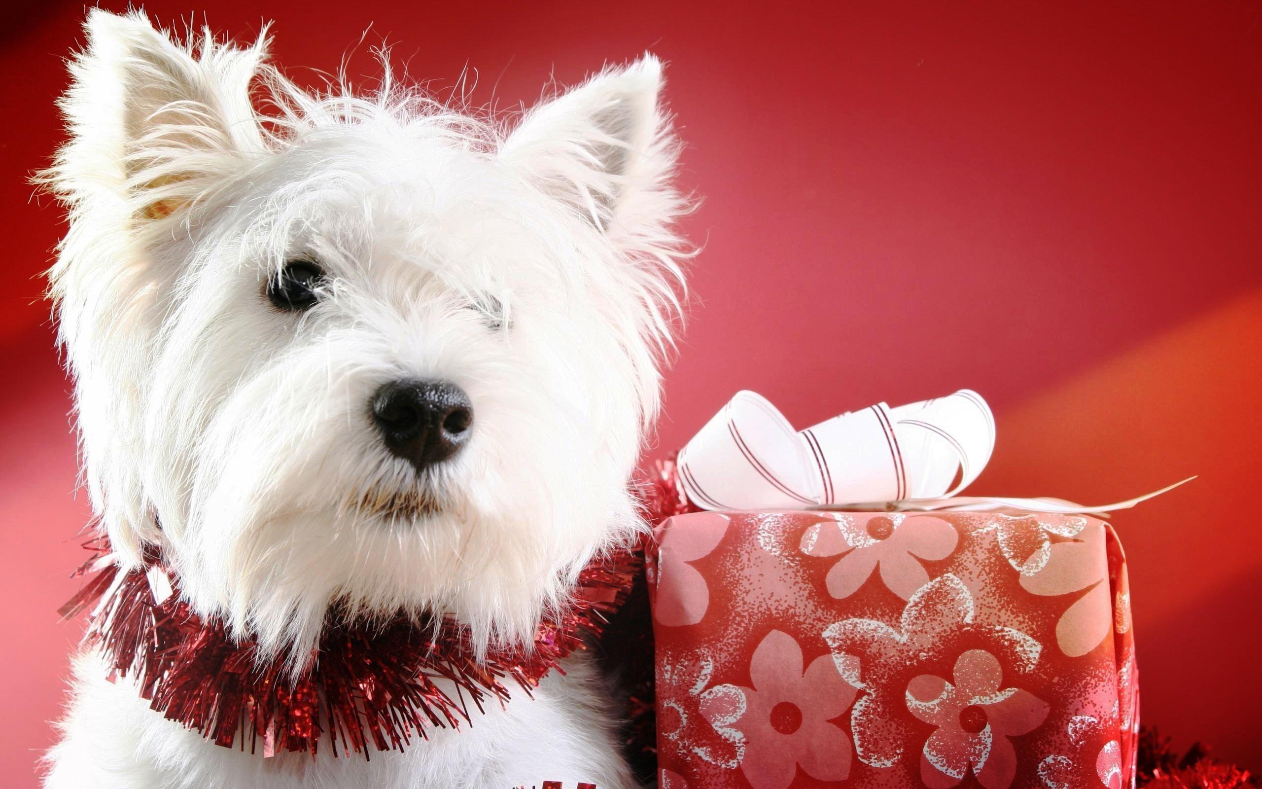 christmas puppy wallpaper - photo #18
