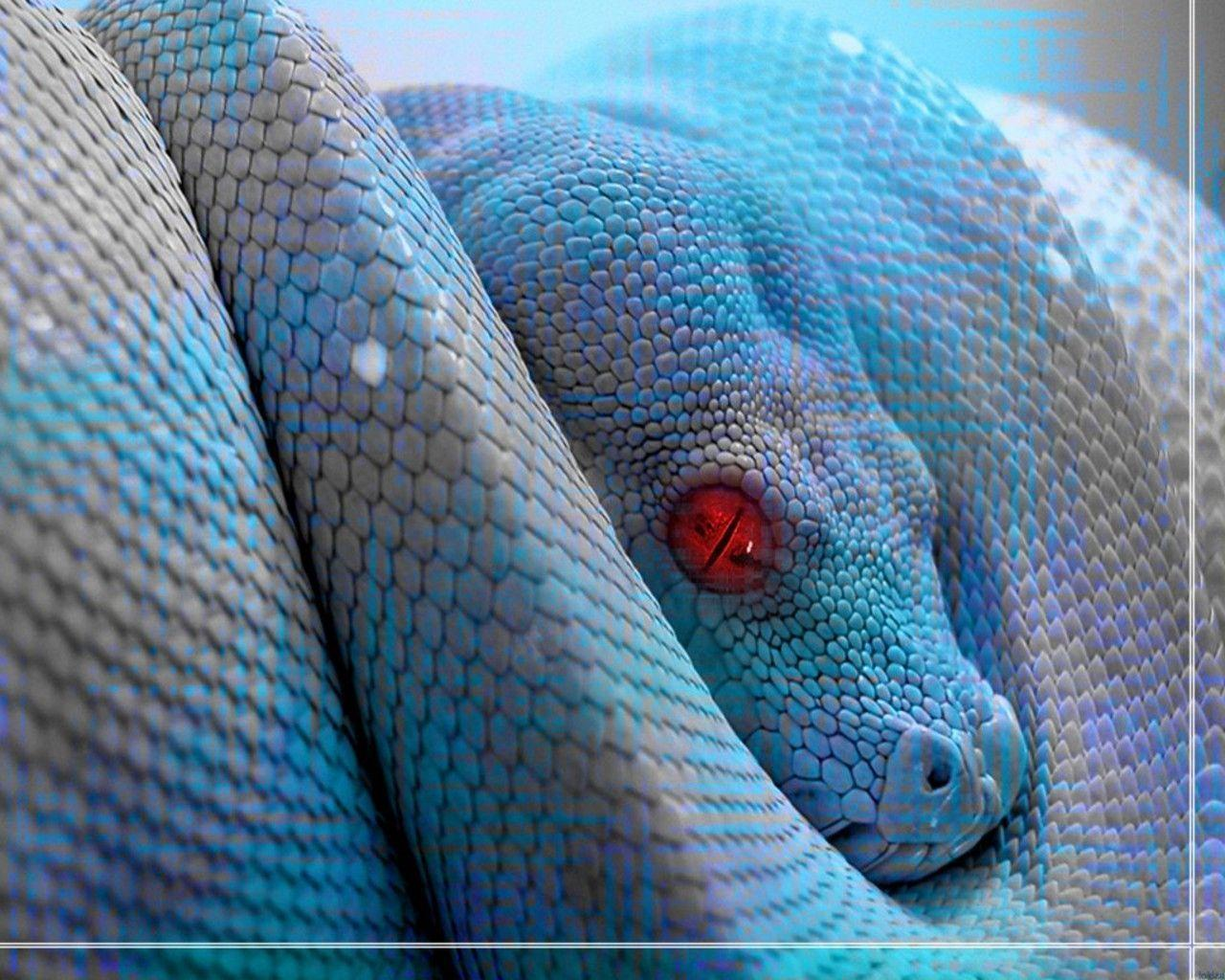 Red Snake Wallpaper Images Pictures