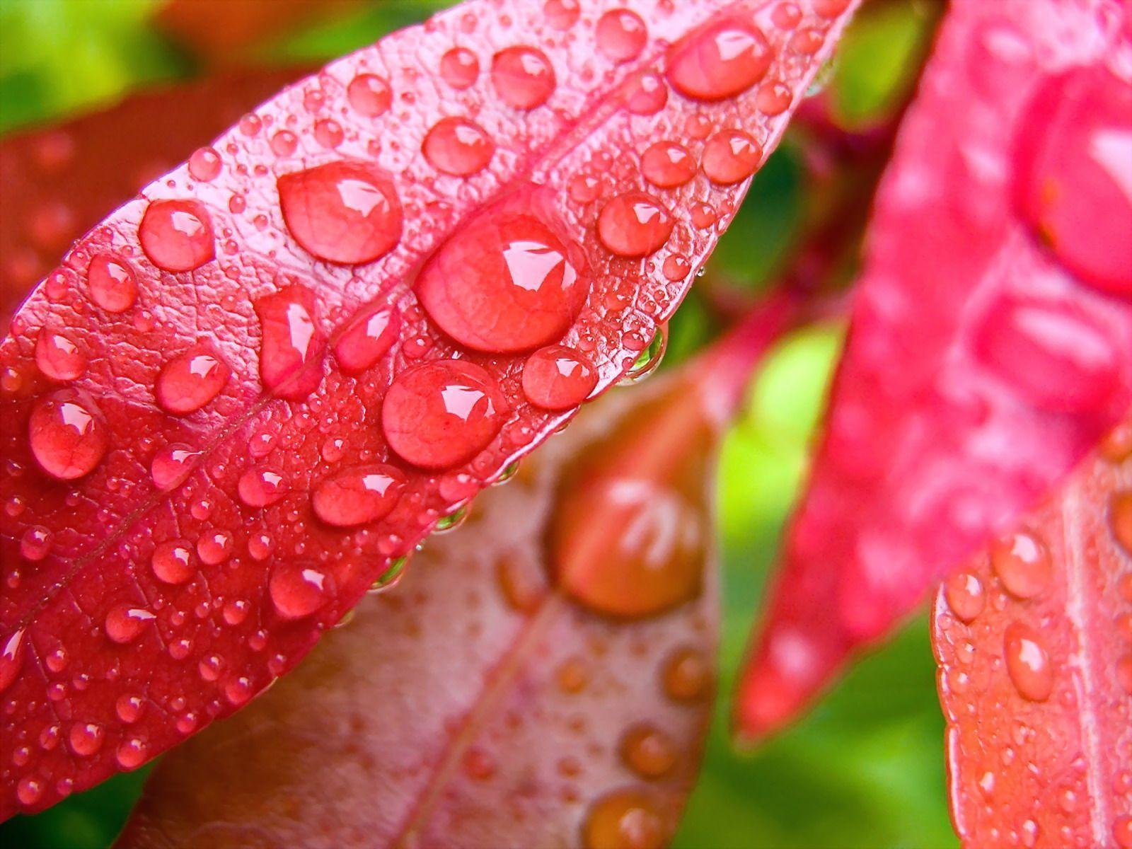 Water Drops on Leaves Wallpapers | HD Wallpapers