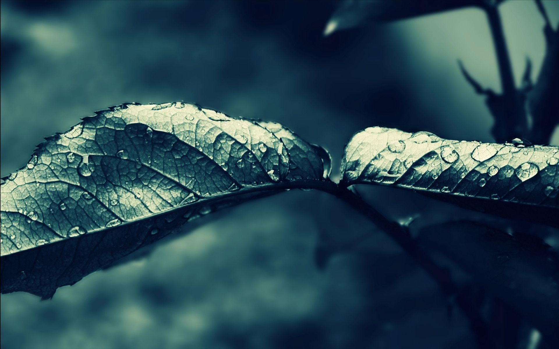 Dark Rain HD Wallpaper | Theme Bin - Customization, HD Wallpapers ...