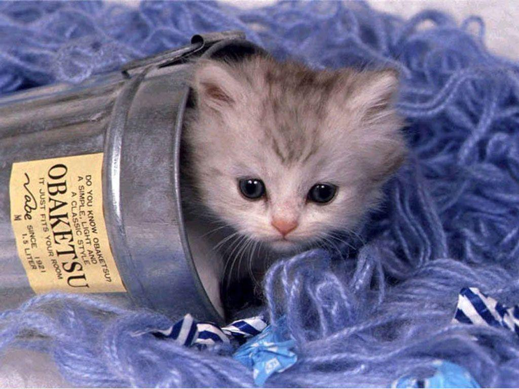 Cute Kittens Wallpapers & Pictures