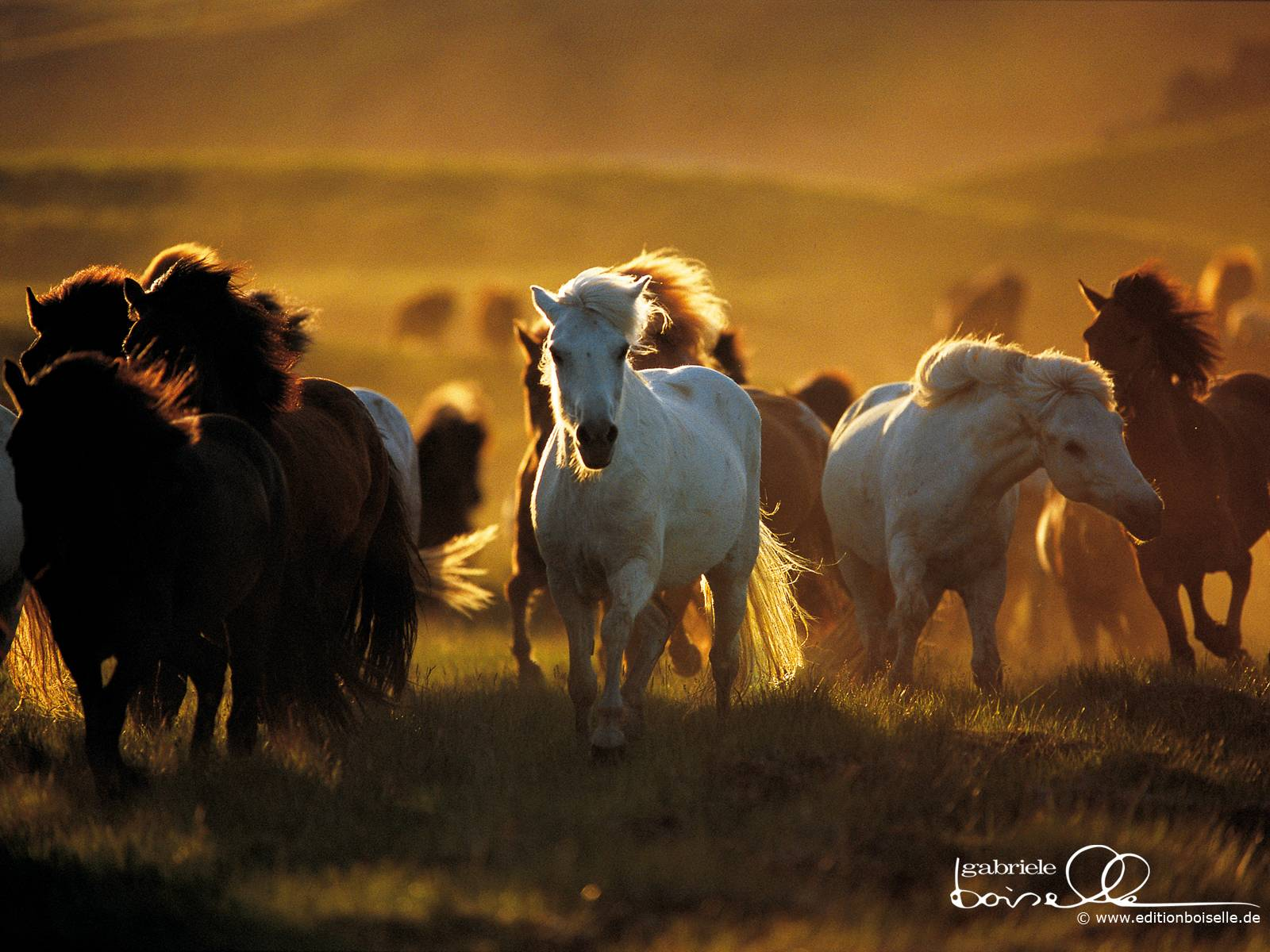 spring wild horse wallpaper - photo #7