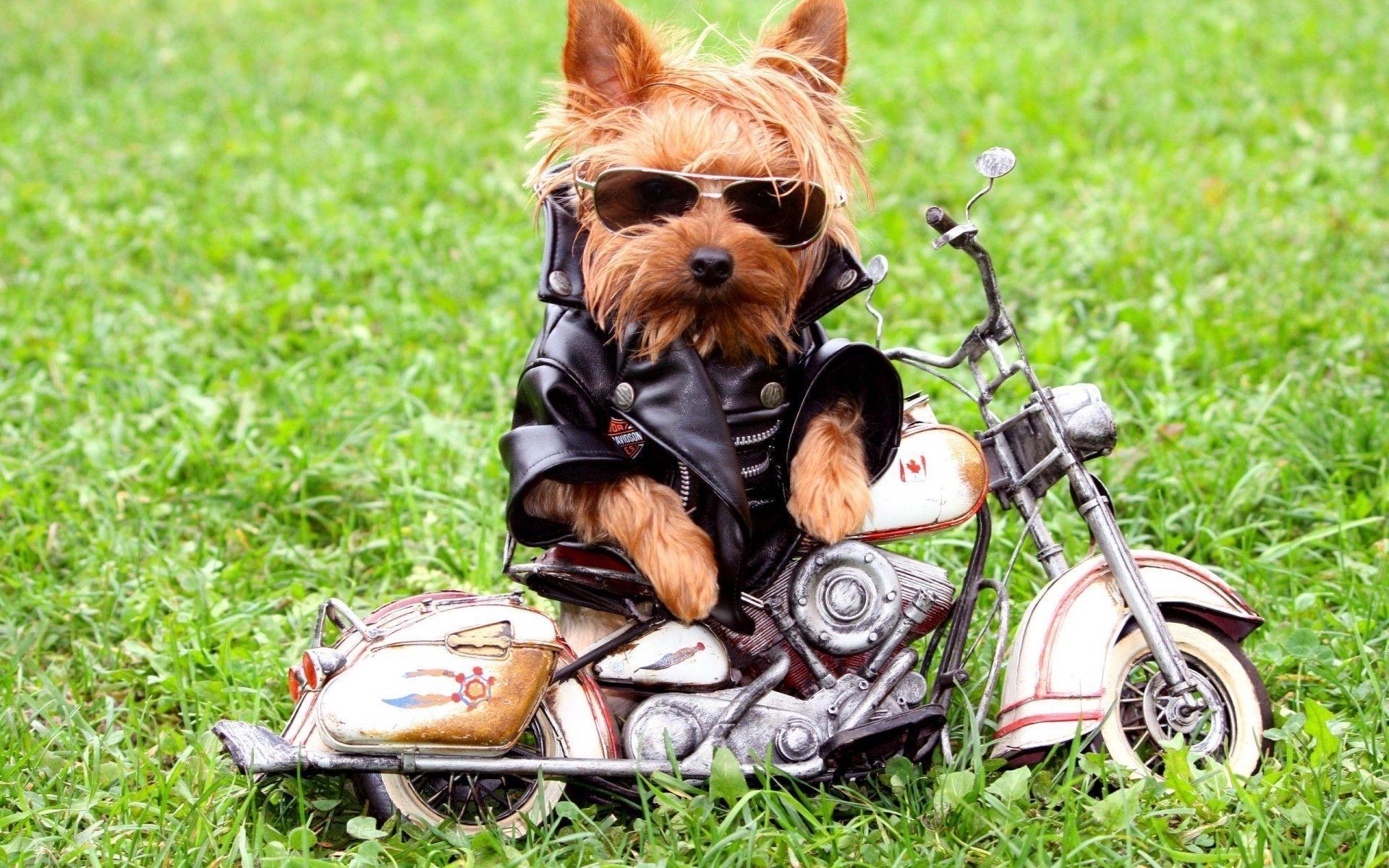 Really Cool Dog Wallpapers