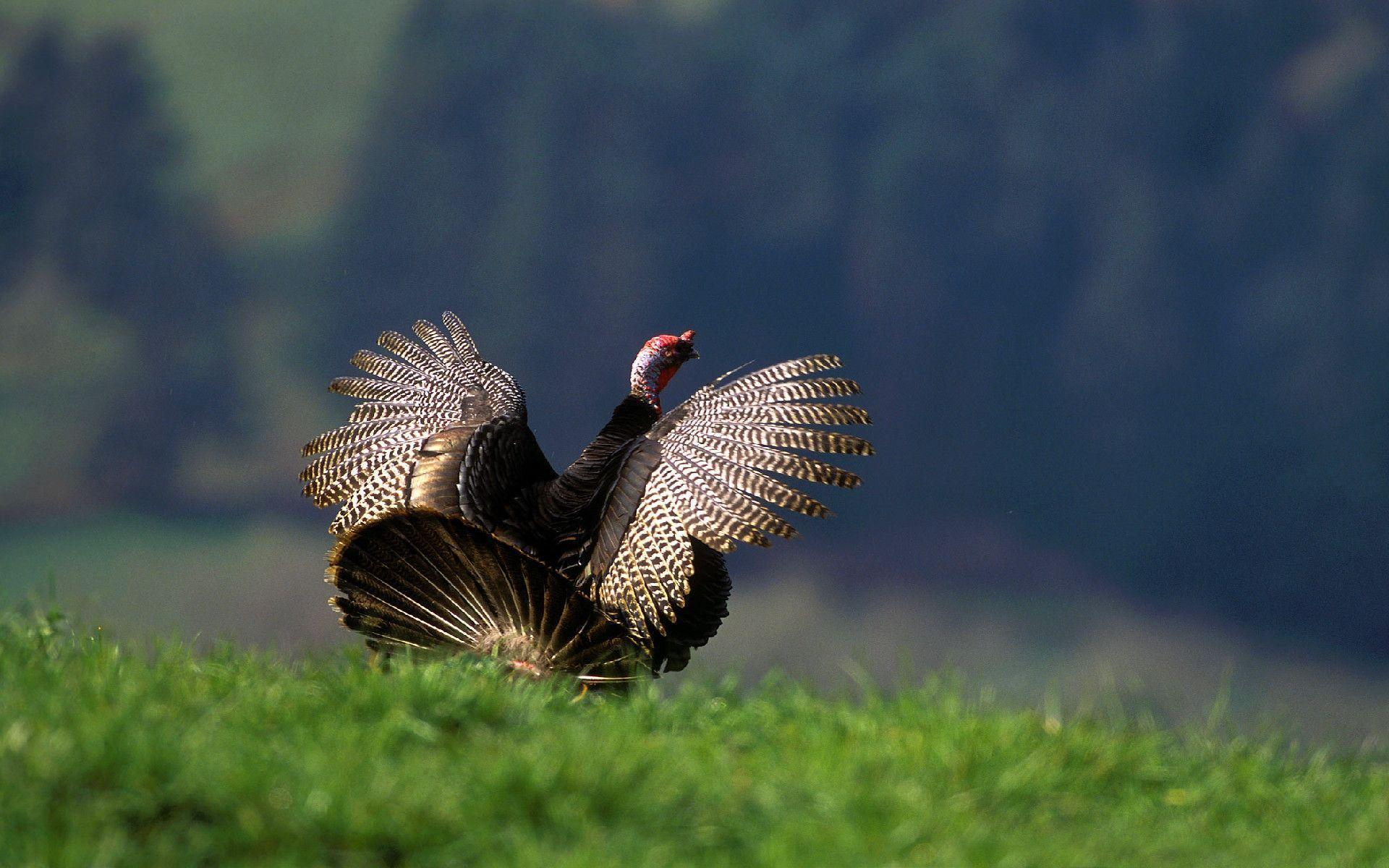 turkey picture wallpaper for - photo #6