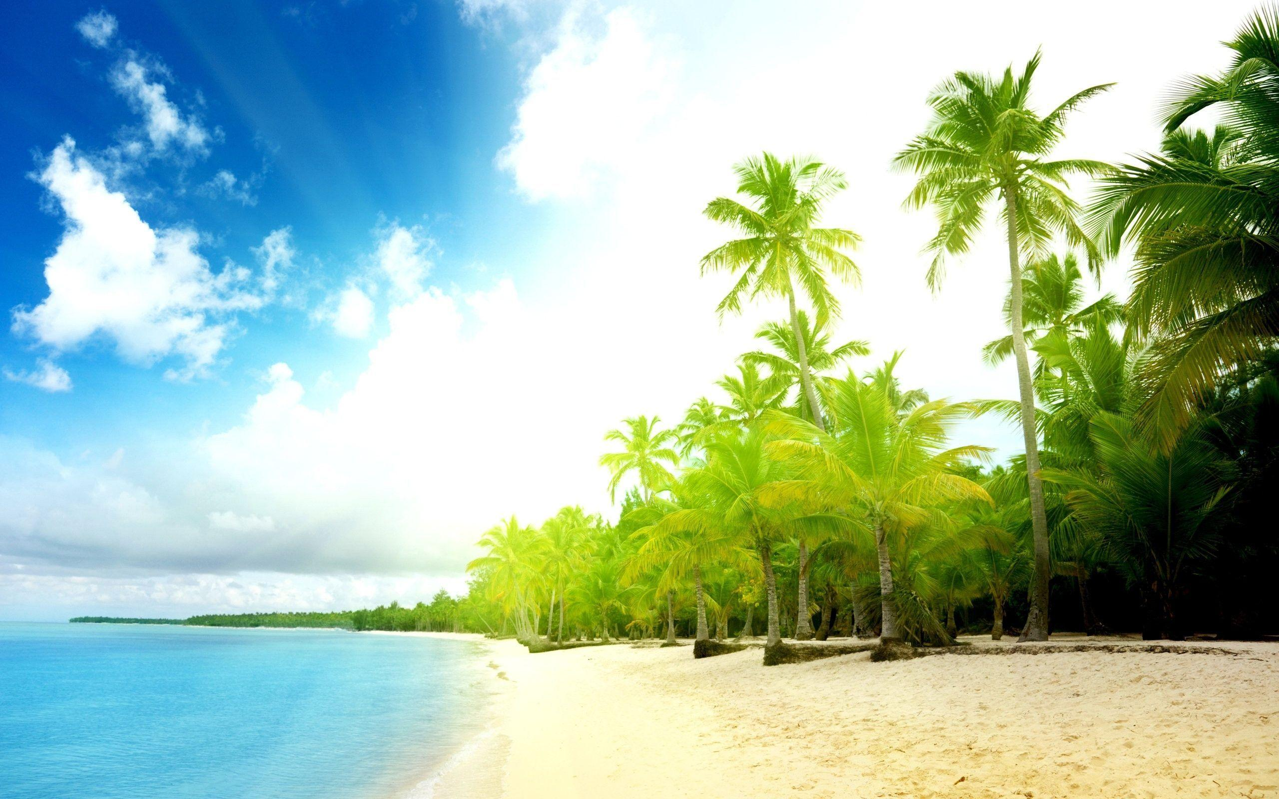 Free Download Exotic Beach View Top Wallpaper