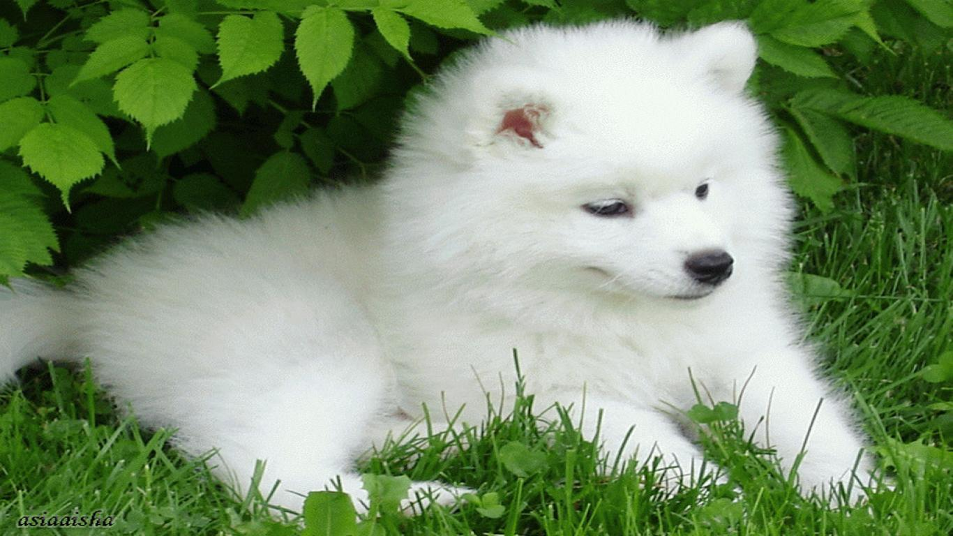 Free Puppy Wallpapers For Computer Wallpaper Cave HD Wallpapers Download Free Images Wallpaper [1000image.com]