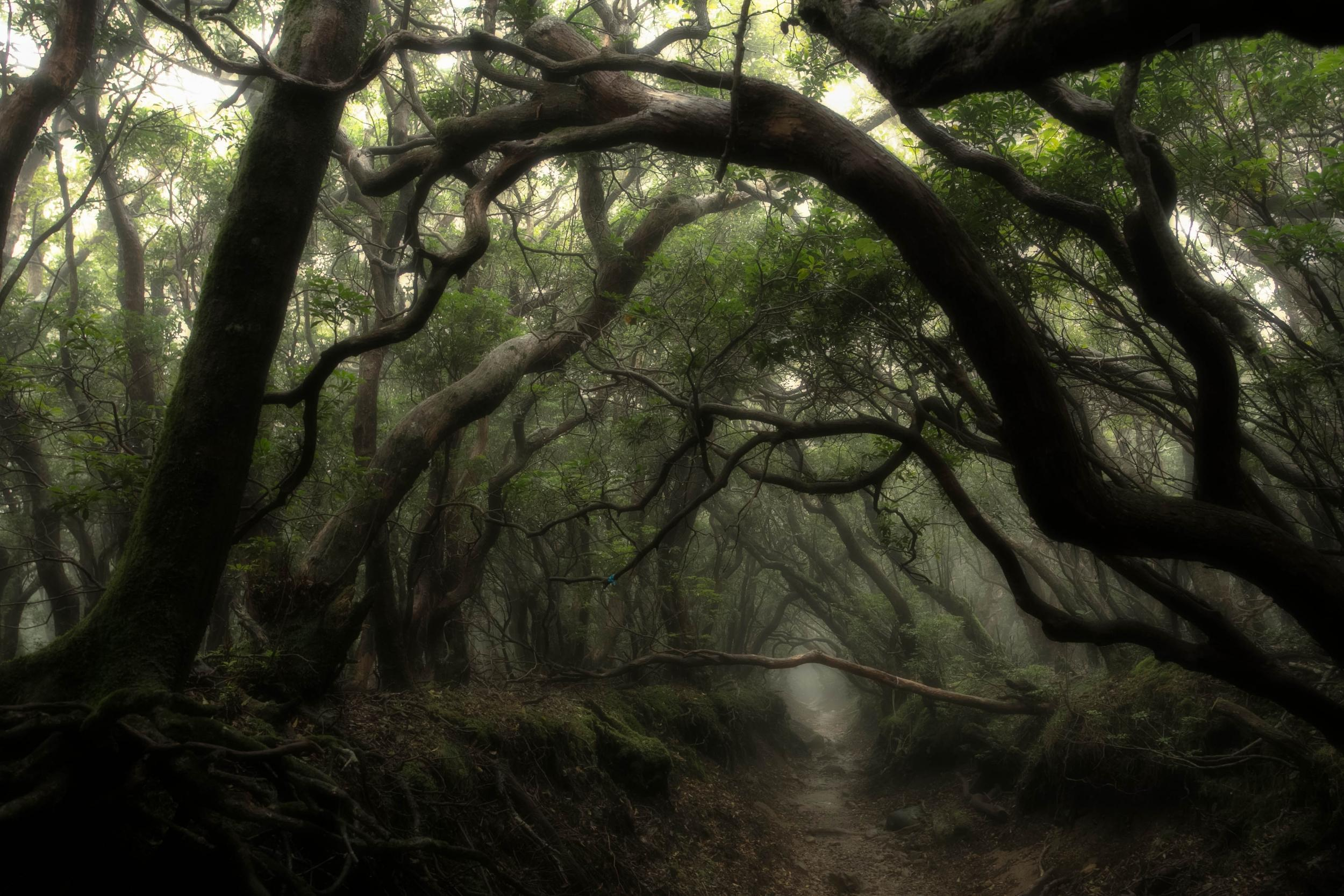 dark places forest trees - photo #31