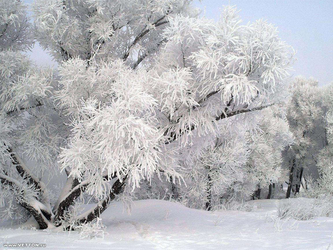 Winter Snow Wallpapers 8 36795 Image HD Wallpapers