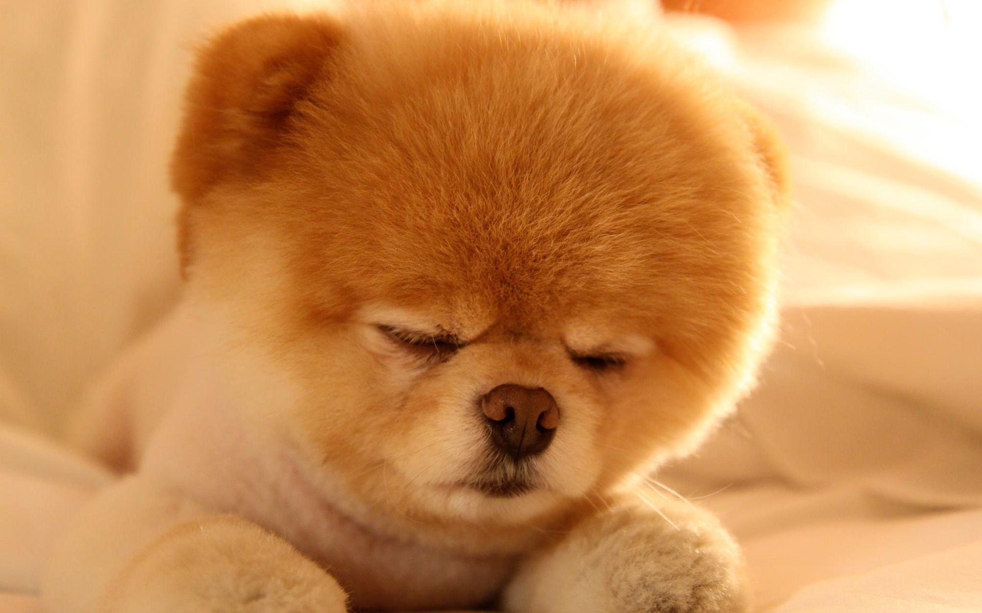 Cute Dog Baby Wallpapers HD