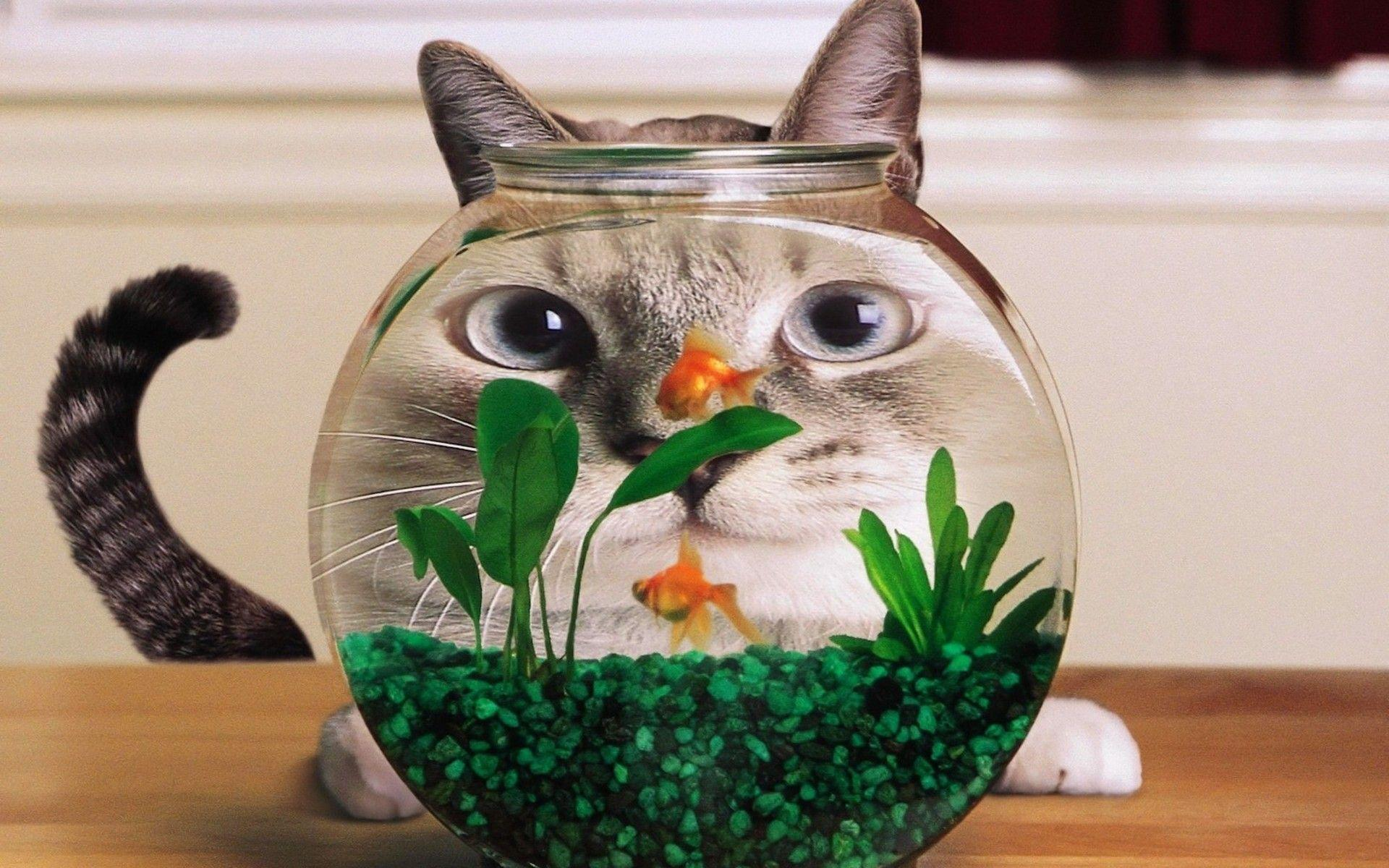 Cat And Gold Fish Wallpapers