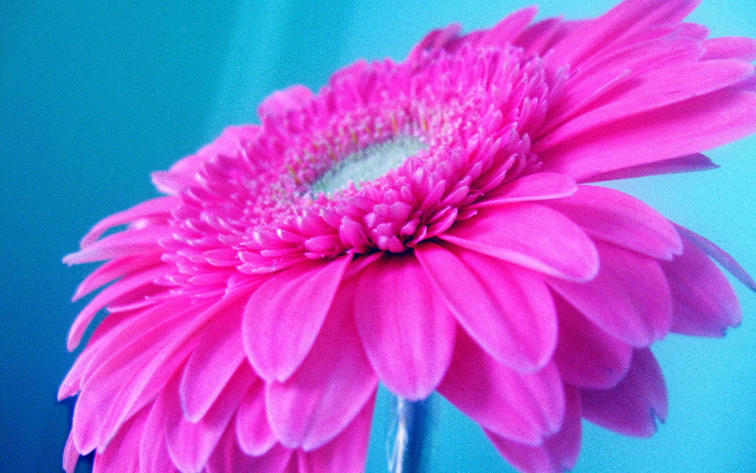 Bright Pink Wallpaper Uk Of Bright Pink Wallpapers Wallpaper Cave