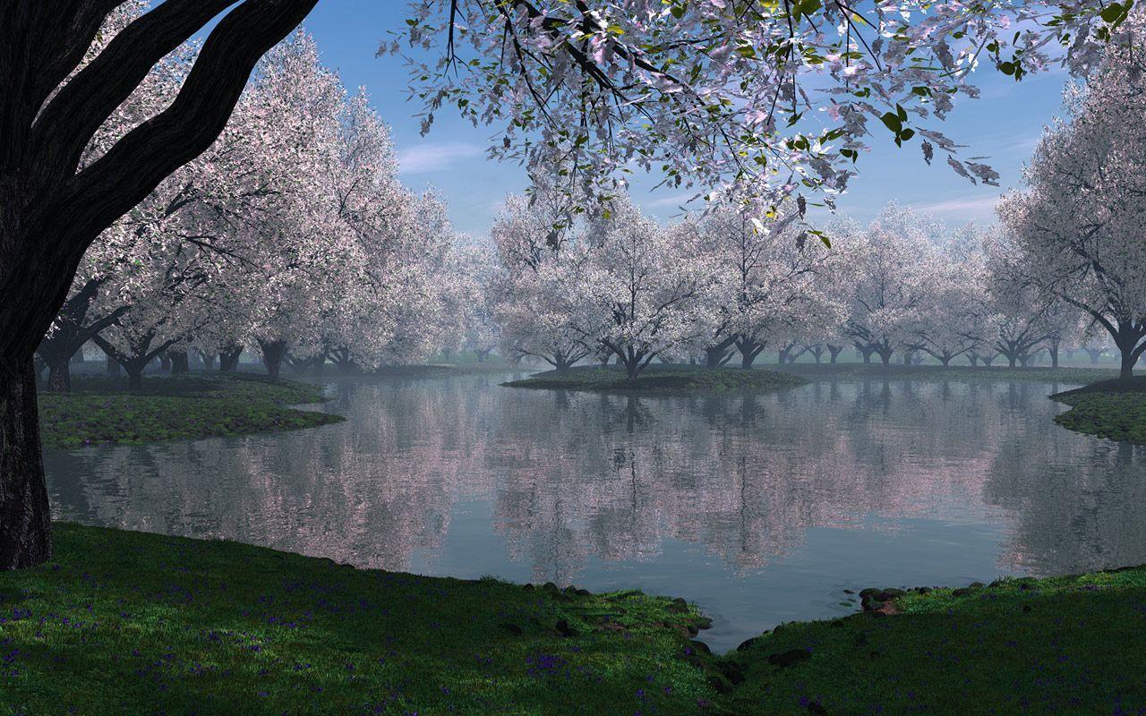 Sakura Flowers Wallpaper HD | Freetopwallpaper.