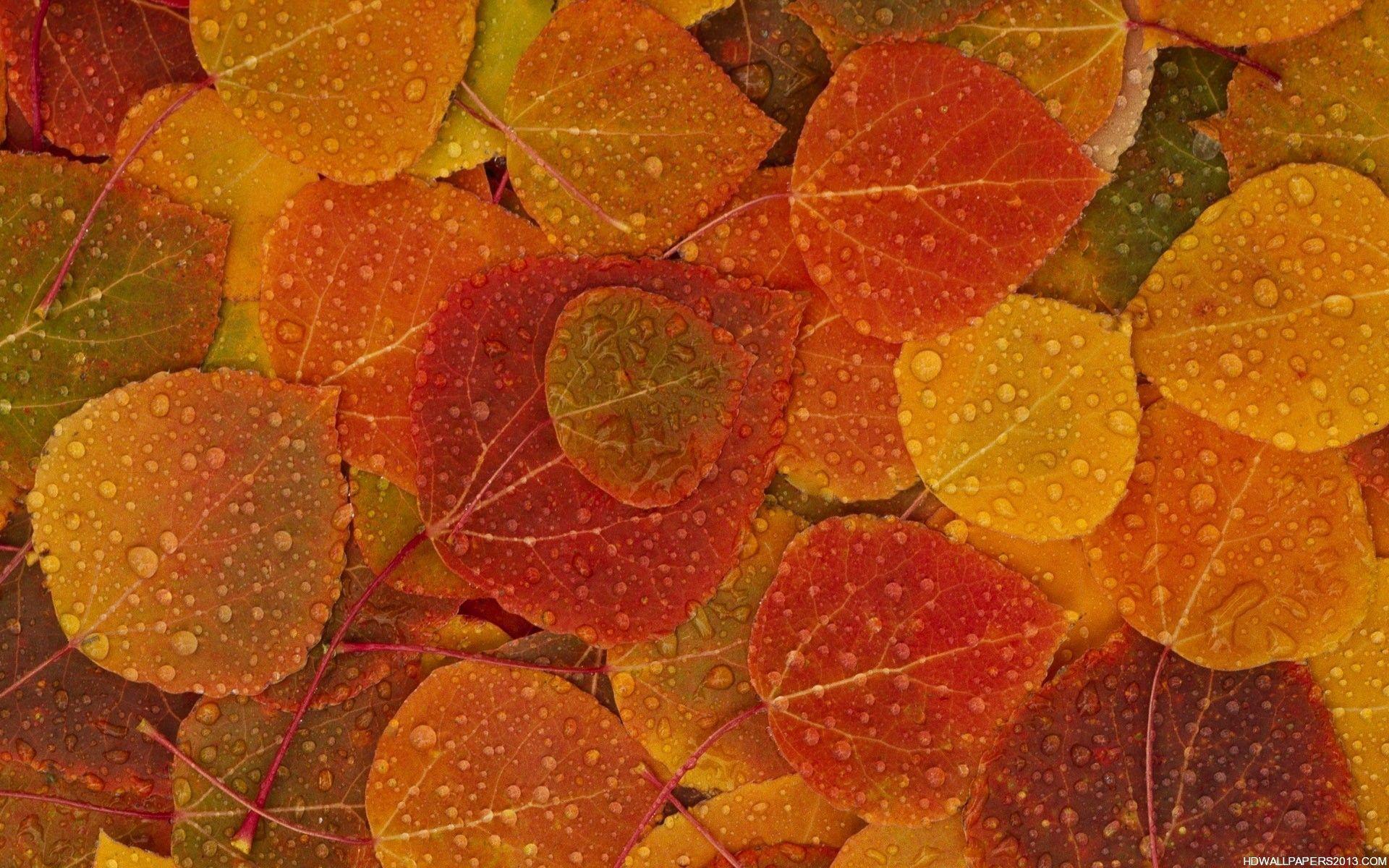 Fall   wallpaper, hd wallpaper, background desktop