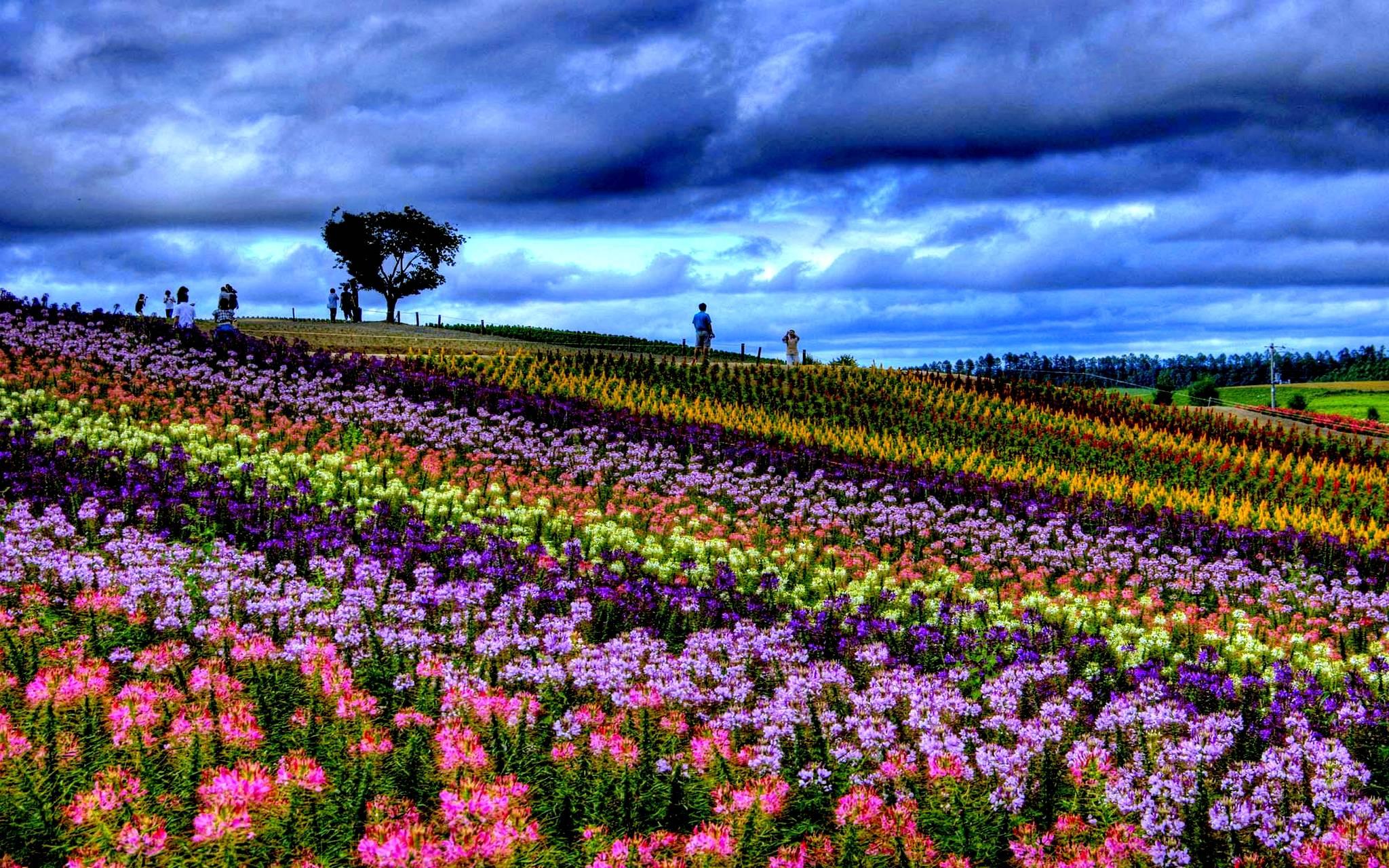 Pin primavera paesaggi hd wallpaper foto sfondi per for Sfondi desktop primavera