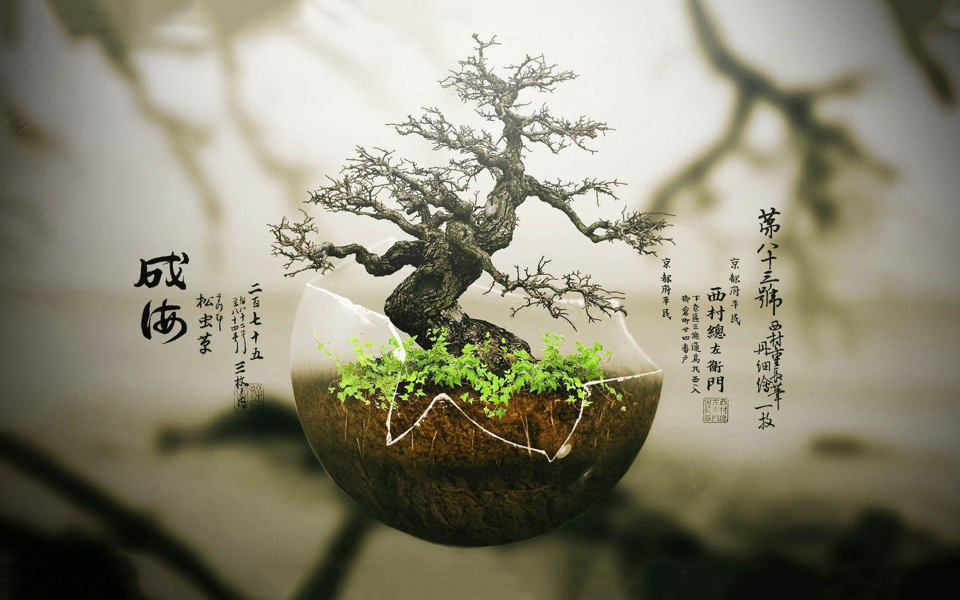 Bonsai tree Wallpapers | Pictures