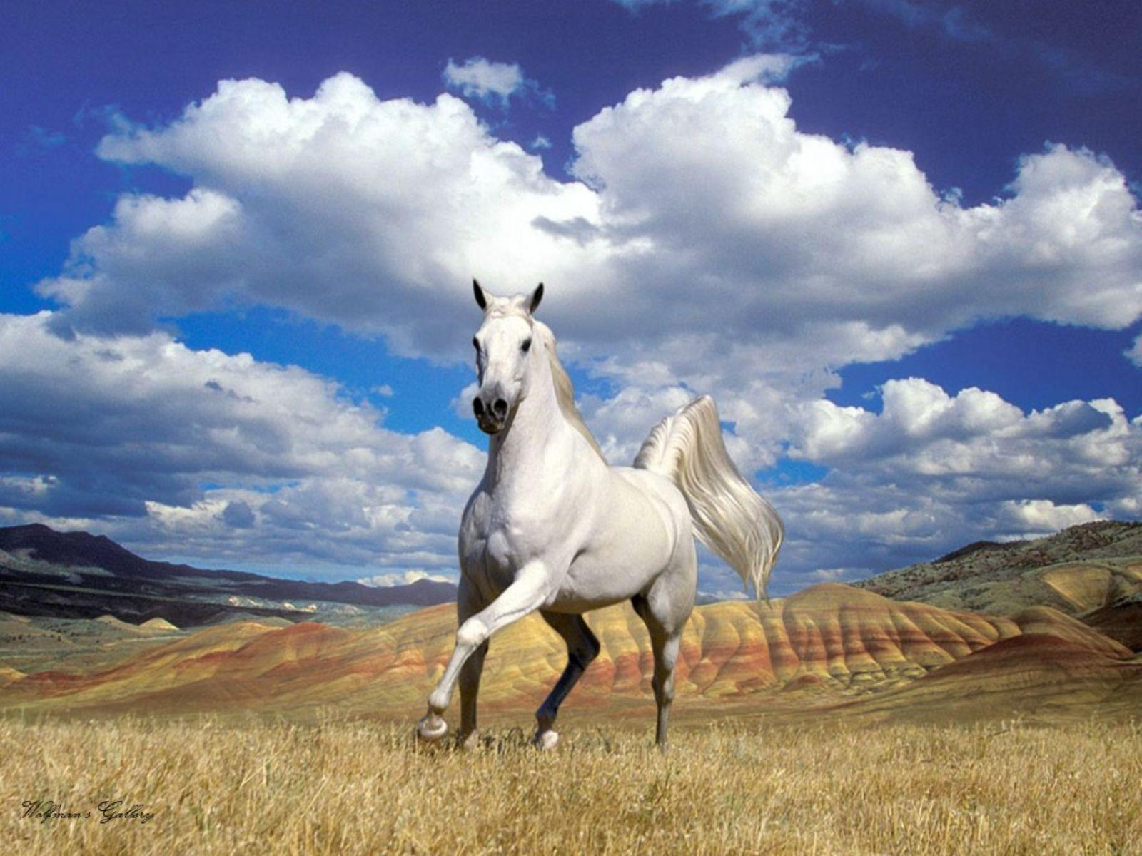 Appaloosa Horse Wallpapers | Pictures of Appaloosa Horses | Cool ...