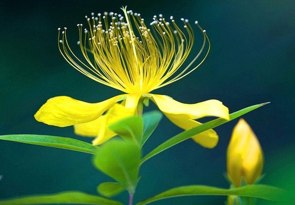 Flower Wallpaper For Pc Desktop Free - Flowers Healthy