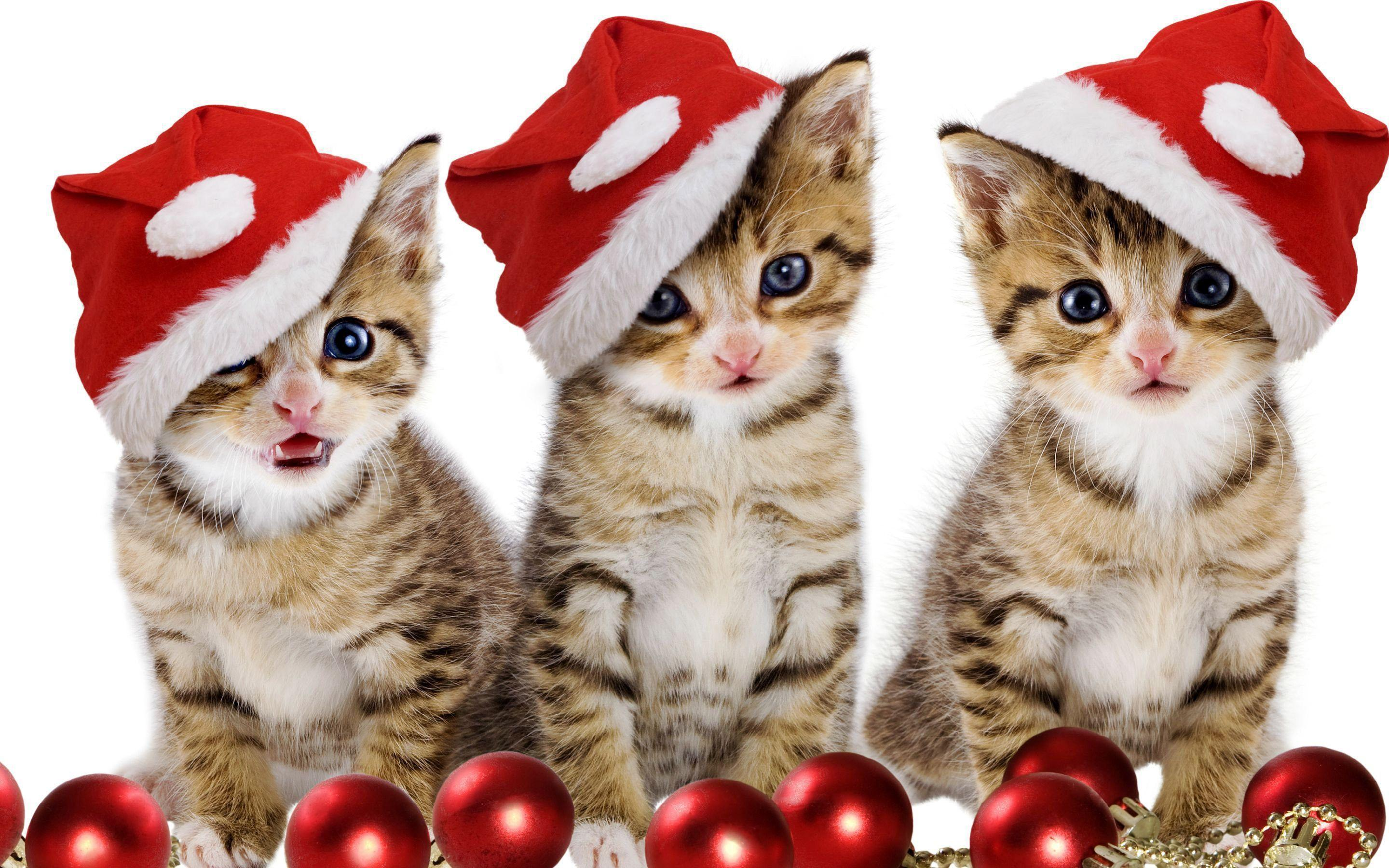 Santa's kittens Wallpaper #