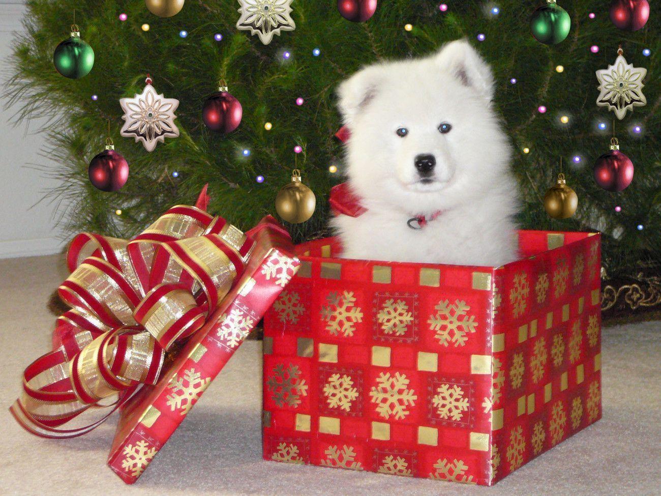 christmas puppy wallpaper - photo #22