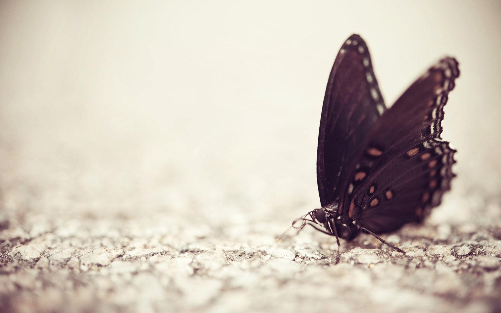 butterfly wallpaper high - photo #17