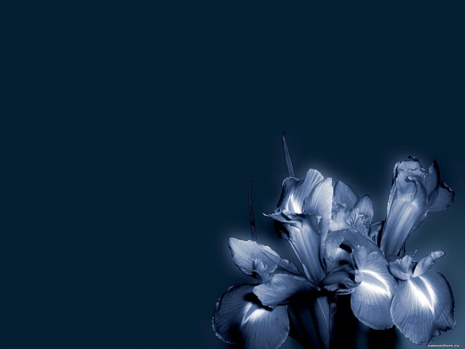 simple blue flower wallpapers - photo #23