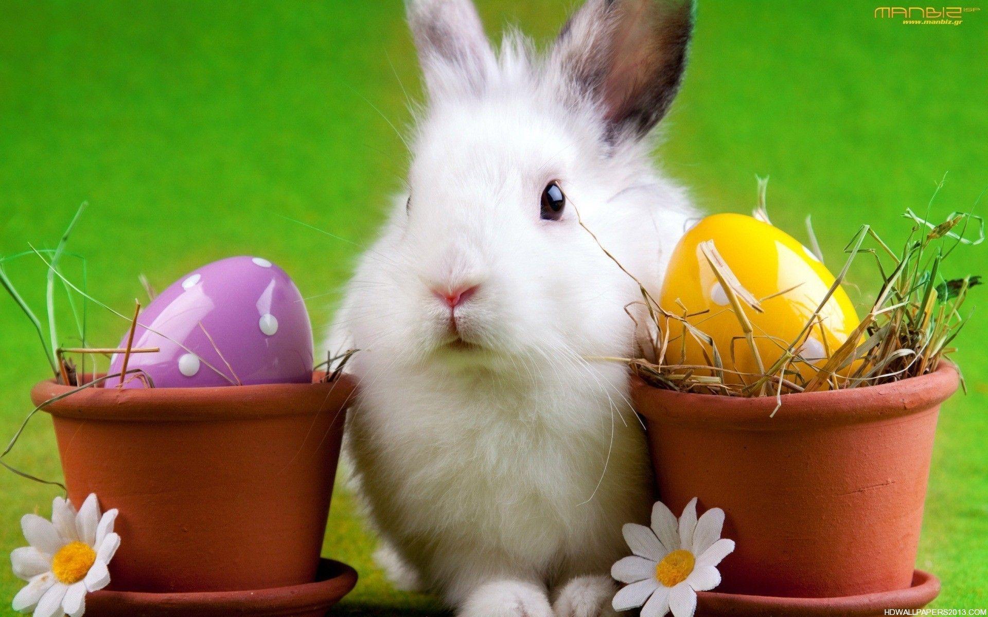 Easter bunny desktop wallpapers wallpaper cave - Easter bunny wallpaper ...