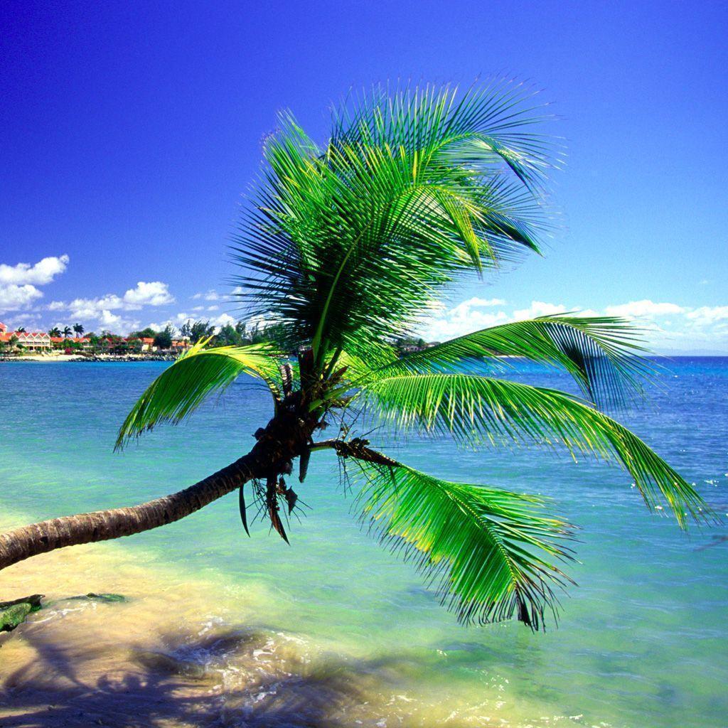 stussy wallpaper palm trees - photo #25