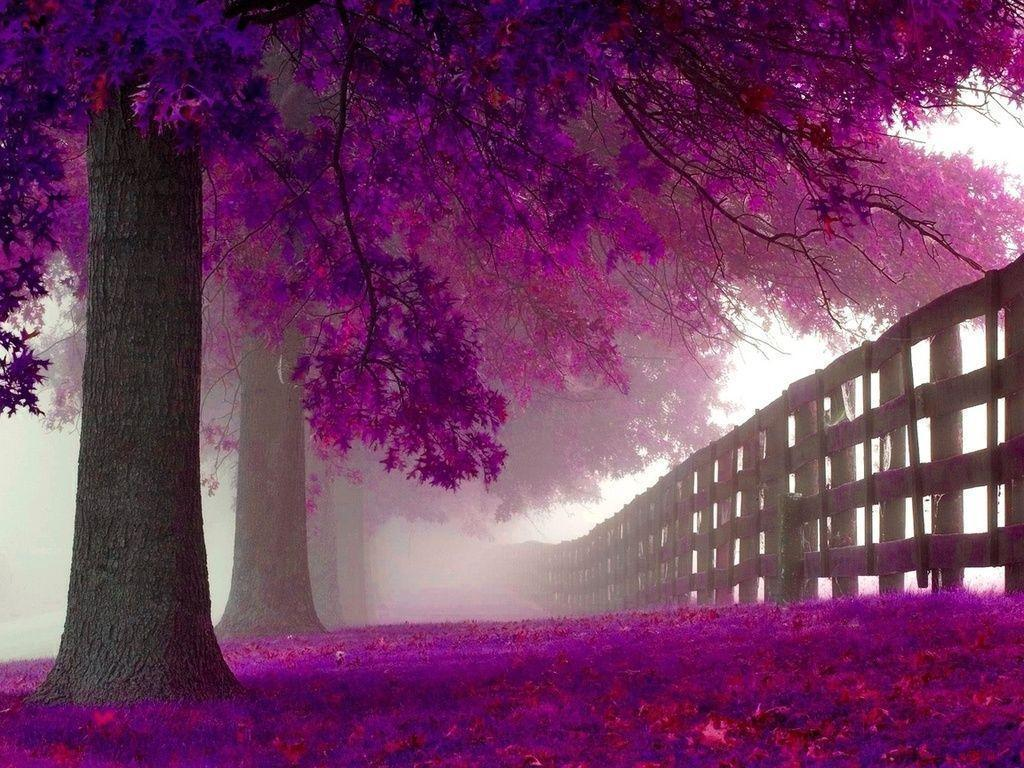 purple tree wallpapers hd trees cave definition