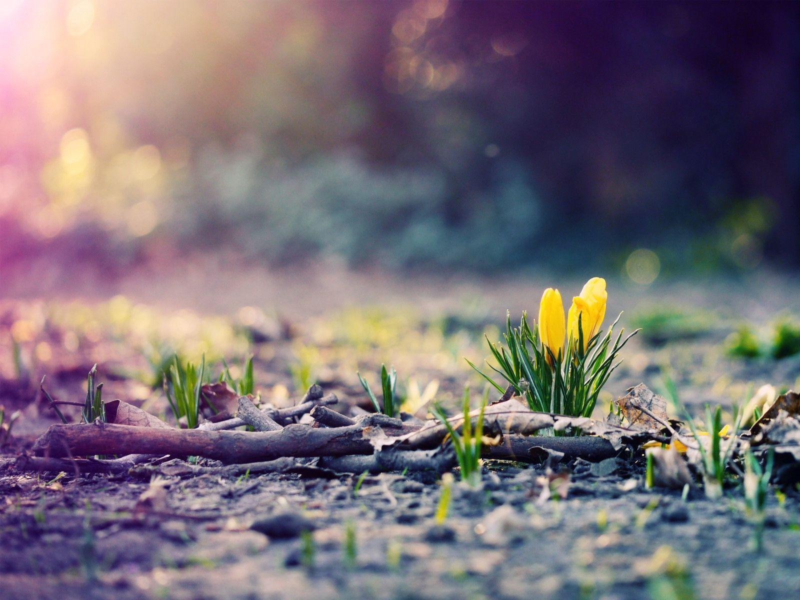 Spring Wallpaper - Wallpapers