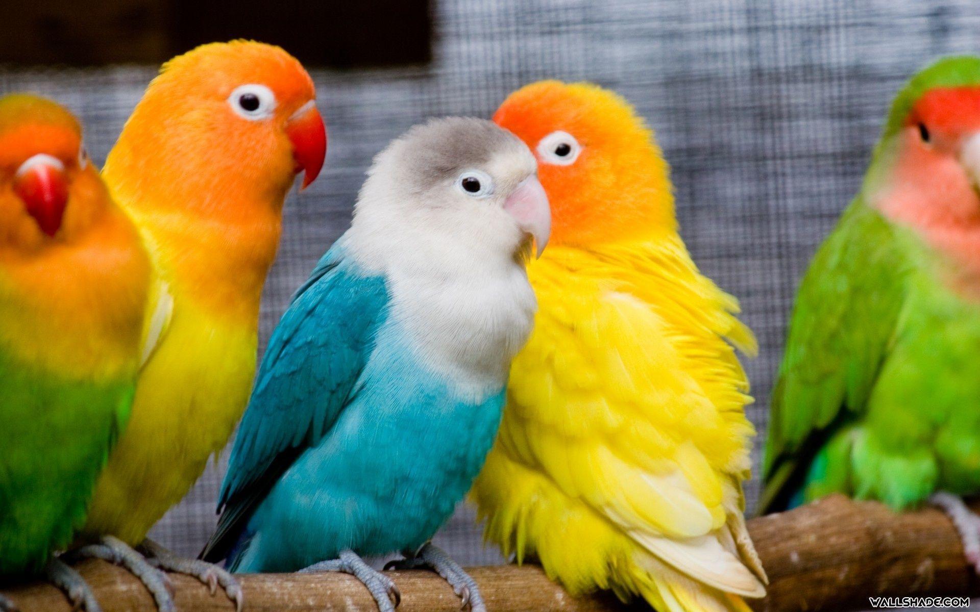 free love birds desktop wallpaper 19201200