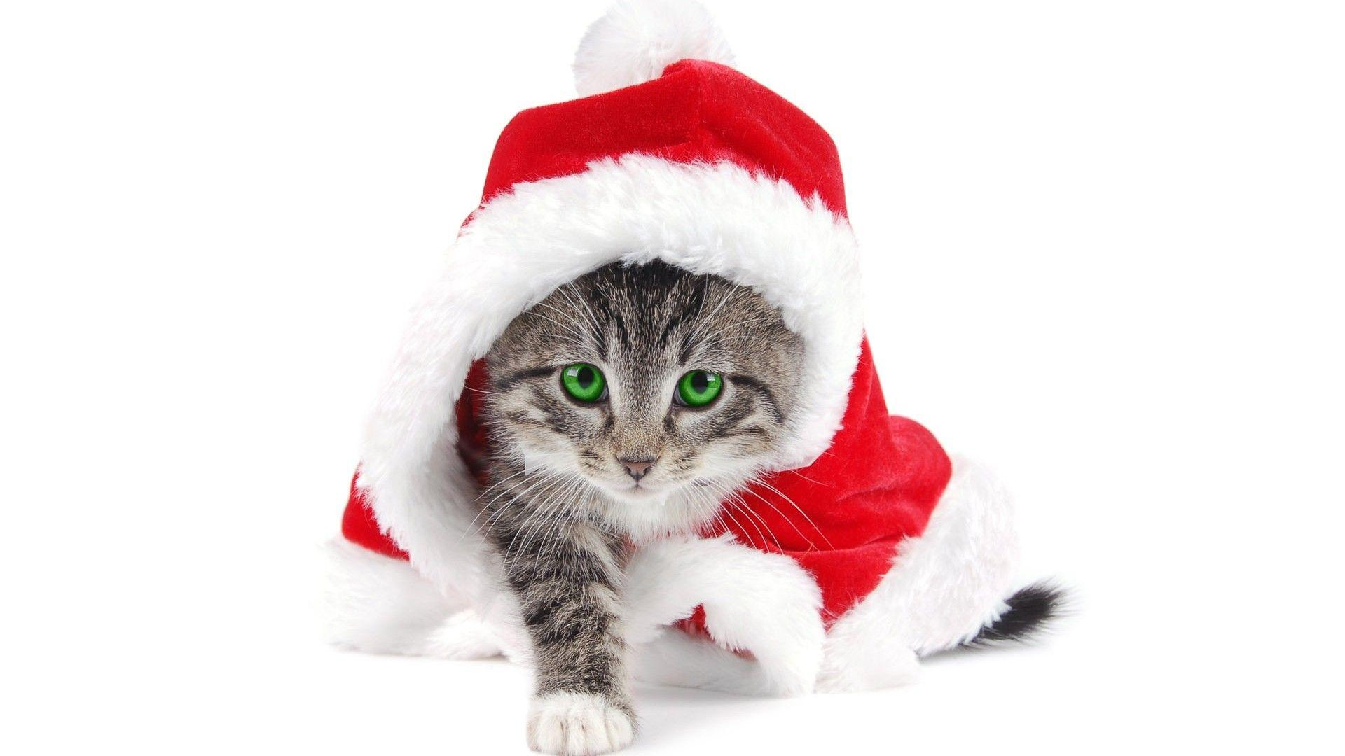 Cute Baby Cat Christmas Wallpaper Free Downloa 11467