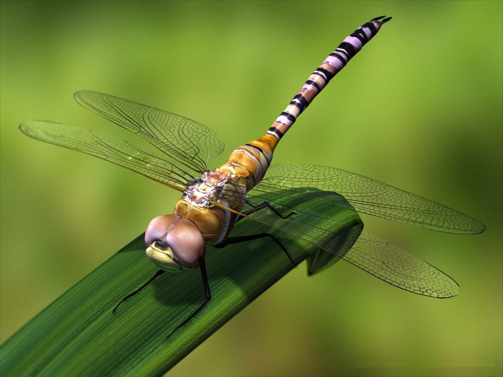 free dragonfly wallpapers wallpaper cave