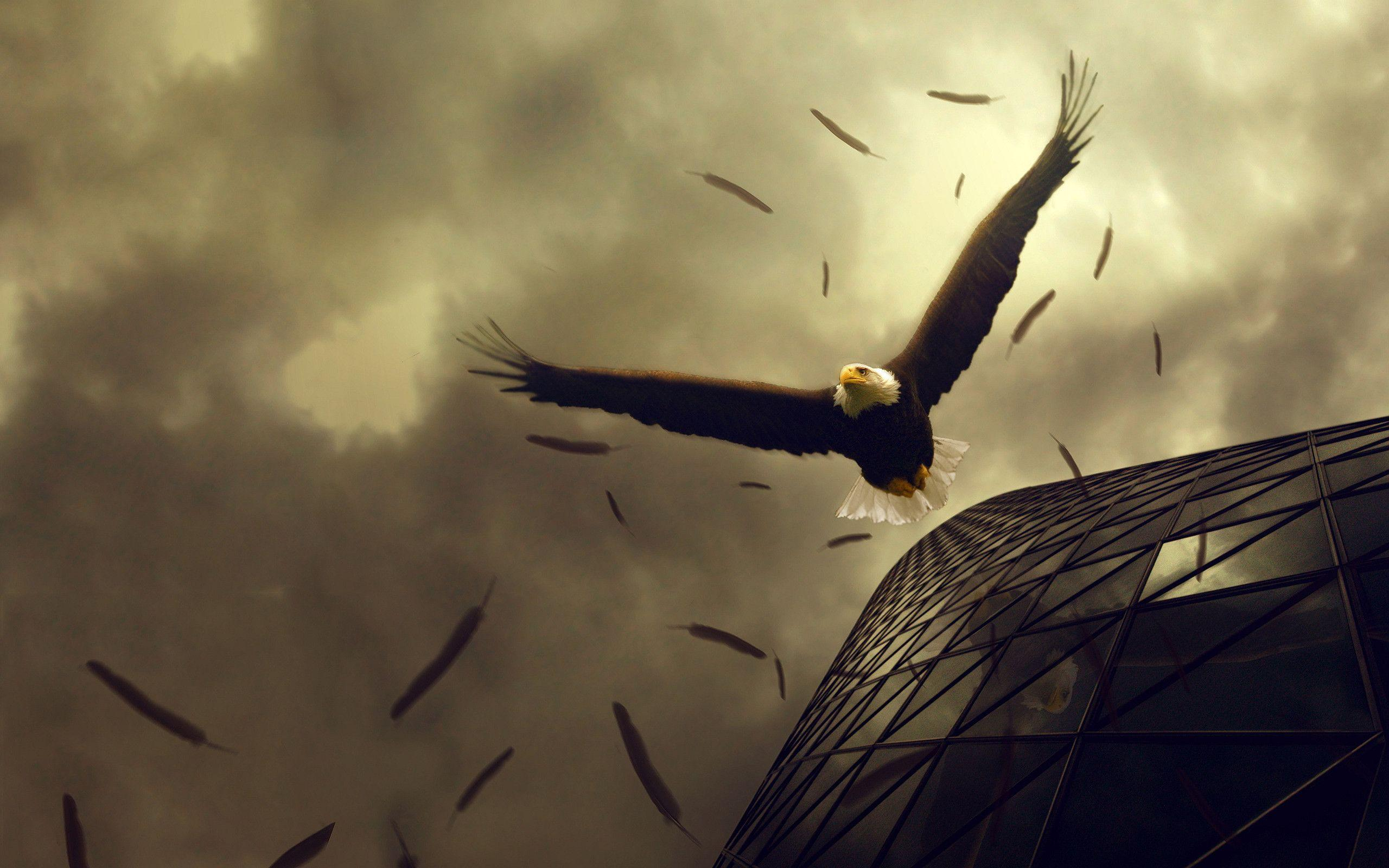 Black Eagle Art Wallpaper #25235 Wallpaper | High ...