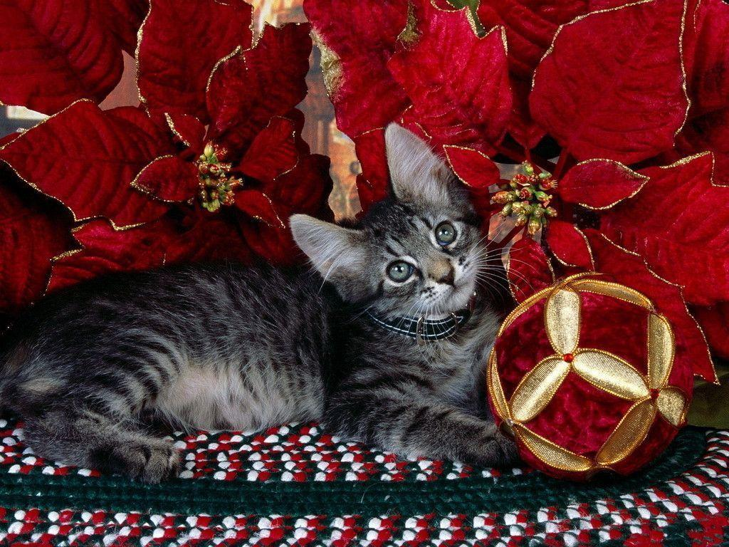Kitten Under Tree - Christmas Wallpaper (2735973) - Fanpop