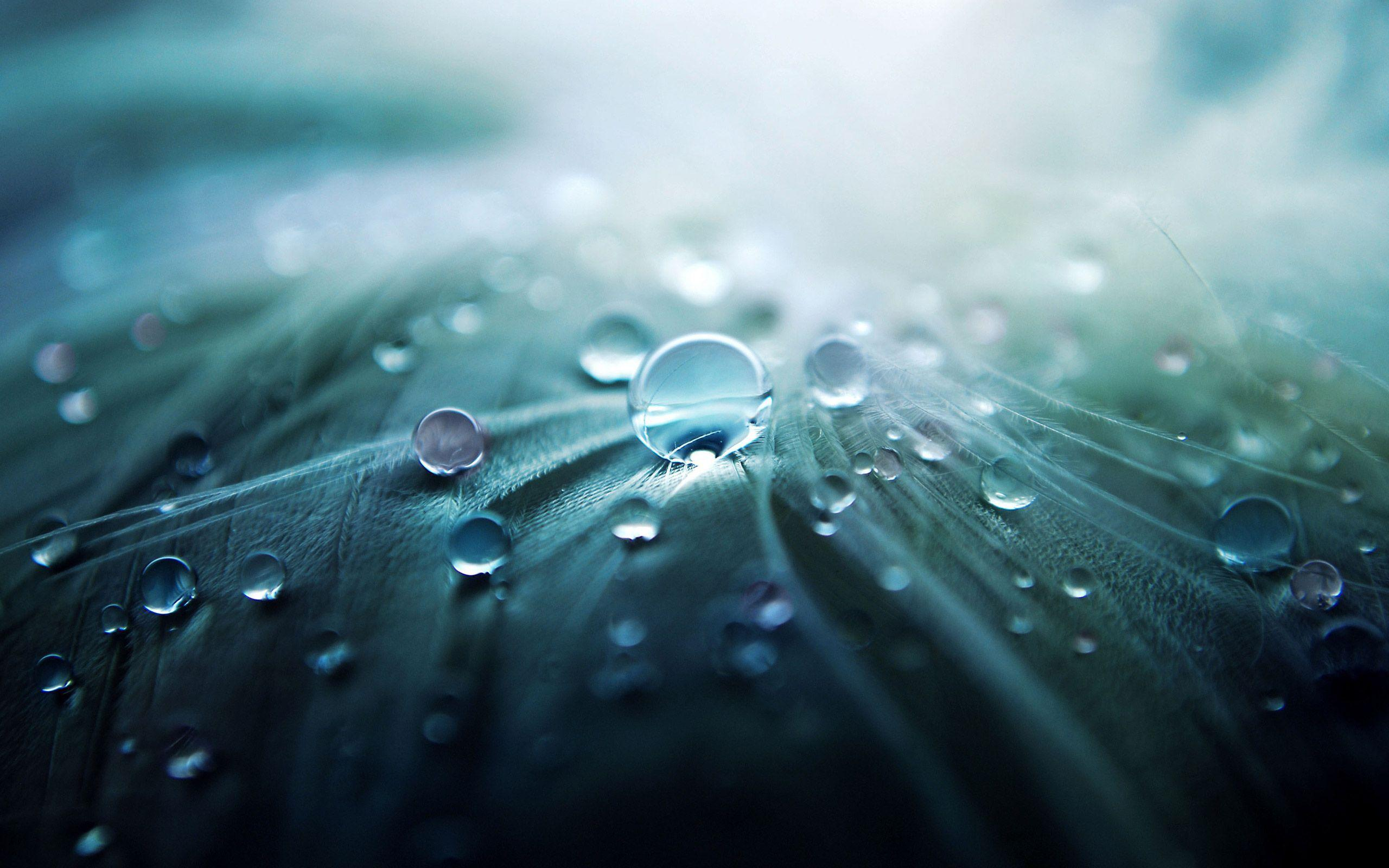 Water Drops Wallpapers - Full HD wallpaper search - page 4