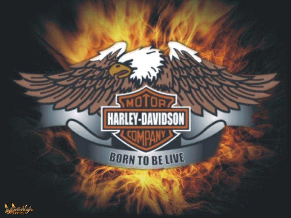 Download Live The Free Harley Davidson Born Wallpaper 1024x768